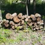 Day 70-The Logs