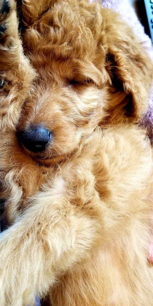 Maggie plays hard and sleeps hard.